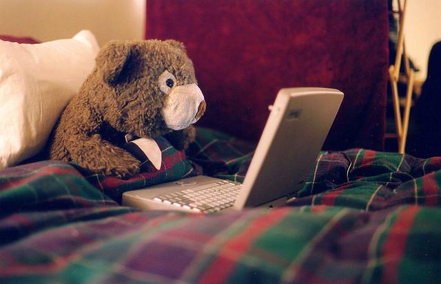 internet-bear